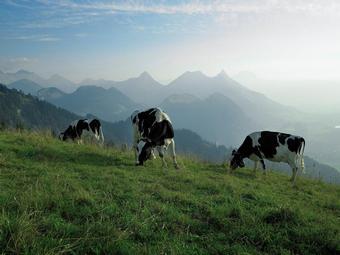 paisaje-con-vacas.jpg