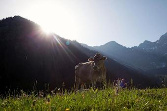 foto-vaca.jpg
