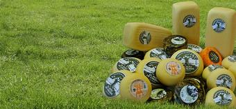 conjunt-formatges-moli-alzina.jpg