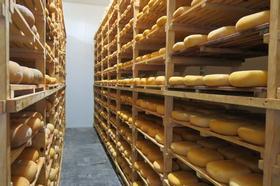 Curso de quesería en Menorca